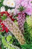 Λουλούδι κρίνων ανανά, Eucomis SP. Στοκ Φωτογραφίες