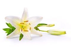 Λουλούδι κρίνων Πάσχας τέχνης που απομονώνεται στο άσπρο υπόβαθρο Στοκ εικόνα με δικαίωμα ελεύθερης χρήσης