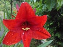 Λουλούδι κόκκινου χρώματος Στοκ φωτογραφία με δικαίωμα ελεύθερης χρήσης
