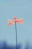 Λουλούδι κόσμου με φιλτραρισμένη την τρύγος επίδραση Στοκ φωτογραφία με δικαίωμα ελεύθερης χρήσης