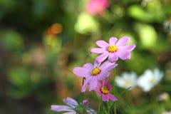 Λουλούδι κόσμου στοκ εικόνα με δικαίωμα ελεύθερης χρήσης