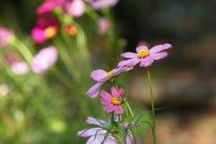 Λουλούδι κόσμου στοκ εικόνες