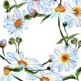 Λουλούδι μαργαριτών Wildflower στο πλαίσιο ένα ύφος watercolor Στοκ Εικόνες