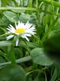 Λουλούδι μεταξύ της χλόης Στοκ φωτογραφίες με δικαίωμα ελεύθερης χρήσης