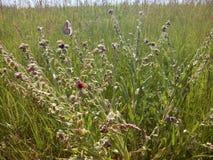 Λουλούδι με μικρές πεταλούδες Στοκ φωτογραφία με δικαίωμα ελεύθερης χρήσης