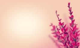 Λουλούδι με τα ρόδινα πέταλα Στοκ Εικόνα