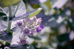 Λουλούδι με την πορφύρα Στοκ Εικόνα