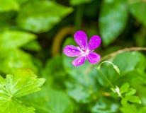 Λουλούδι με την πτώση νερού Στοκ φωτογραφία με δικαίωμα ελεύθερης χρήσης