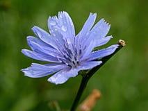 Λουλούδι με τις πτώσεις Στοκ εικόνα με δικαίωμα ελεύθερης χρήσης
