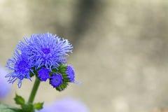 Λουλούδι με το ιώδες άνθος Στοκ εικόνα με δικαίωμα ελεύθερης χρήσης