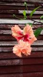 Λουλούδι με το ξύλινο υπόβαθρο Στοκ Εικόνα