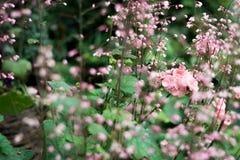 Λουλούδι με το υπόβαθρο θαμπάδων στοκ φωτογραφία
