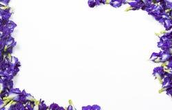 Λουλούδι μπιζελιών πεταλούδων Στοκ Εικόνες