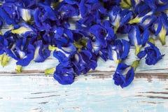 Λουλούδι μπιζελιών πεταλούδων Στοκ φωτογραφίες με δικαίωμα ελεύθερης χρήσης