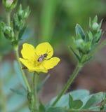 Λουλούδι νεραγκουλών στοκ εικόνα με δικαίωμα ελεύθερης χρήσης