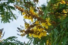 Λουλούδι λοβών χαλκού Στοκ φωτογραφίες με δικαίωμα ελεύθερης χρήσης