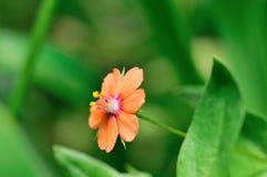 Λουλούδι ομορφιάς Στοκ φωτογραφίες με δικαίωμα ελεύθερης χρήσης