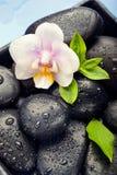 Λουλούδι ορχιδεών, πράσινα φύλλα και πέτρες SPA στο υγρό μπλε backgroun στοκ φωτογραφίες με δικαίωμα ελεύθερης χρήσης