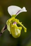 Λουλούδι ορχιδεών Στοκ εικόνα με δικαίωμα ελεύθερης χρήσης