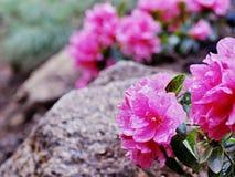 Λουλούδι ορών Στοκ Φωτογραφίες