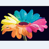 Λουλούδι ουράνιων τόξων Στοκ εικόνες με δικαίωμα ελεύθερης χρήσης
