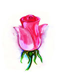 Λουλούδι οδοντώστε αυξήθηκε Στοκ Εικόνα