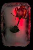 Λουλούδι πάγου Στοκ φωτογραφία με δικαίωμα ελεύθερης χρήσης