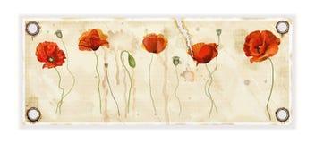 Λουλούδι παπαρουνών Απεικόνιση αποθεμάτων
