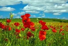 Λουλούδι παπαρουνών Στοκ φωτογραφία με δικαίωμα ελεύθερης χρήσης