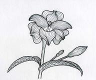 Λουλούδι παραμυθιού ζωγραφικής μελανιού Στοκ φωτογραφία με δικαίωμα ελεύθερης χρήσης