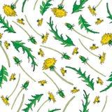 Λουλούδι πικραλίδων, οφθαλμός, συρμένο διανυσματικό σκίτσο χρώματος μελανιού φύλλων χέρι Στοκ Φωτογραφία