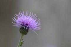 Λουλούδι πορτοφολιών Στοκ Εικόνες