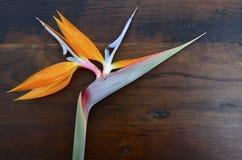 Λουλούδι πουλιών του παραδείσου στο ξύλινο υπόβαθρο Στοκ εικόνες με δικαίωμα ελεύθερης χρήσης