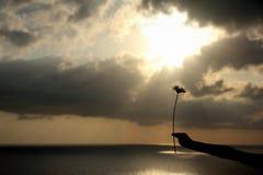 Λουλούδι που παραδίδεται Στοκ φωτογραφίες με δικαίωμα ελεύθερης χρήσης