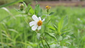 Λουλούδι που φυσά στον αέρα φιλμ μικρού μήκους