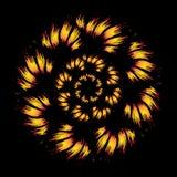 Λουλούδι πυρκαγιάς στο μαύρο υπόβαθρο Στοκ Εικόνα