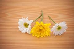 Λουλούδι ρύθμισης σε ξύλινο με το κενό διάστημα Στοκ Εικόνες