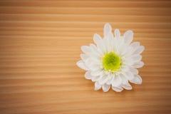 Λουλούδι ρύθμισης σε ξύλινο με το κενό διάστημα Στοκ Εικόνα