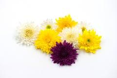 Λουλούδι ρύθμισης στο λευκό Στοκ εικόνα με δικαίωμα ελεύθερης χρήσης