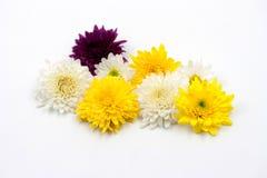 Λουλούδι ρύθμισης στο λευκό Στοκ φωτογραφία με δικαίωμα ελεύθερης χρήσης