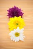 Λουλούδι ρύθμισης στο ξύλινο υπόβαθρο Στοκ Φωτογραφίες