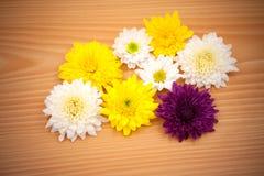 Λουλούδι ρύθμισης στο ξύλινο υπόβαθρο Στοκ φωτογραφία με δικαίωμα ελεύθερης χρήσης