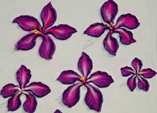 Λουλούδι σε έναν τοίχο στοκ φωτογραφία με δικαίωμα ελεύθερης χρήσης