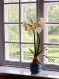 Λουλούδι σε ένα windowsill στοκ φωτογραφίες