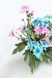 Λουλούδι σε δοχείο Στοκ Φωτογραφία