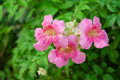 Λουλούδι σε πράσινο στην Ταϊλάνδη Στοκ Εικόνες
