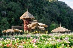 Λουλούδι στα σχέδια κήπων με την ένωση του δοχείου λουλουδιών Στοκ Εικόνες