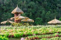 Λουλούδι στα σχέδια κήπων στο βασιλικό γεωργικό ANG Khang, Chiang Mai Ταϊλάνδη σταθμών Στοκ Φωτογραφίες