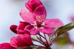 Λουλούδι στην άνθιση Στοκ Φωτογραφία