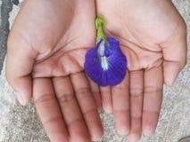 Λουλούδι στη διάθεση Στοκ φωτογραφίες με δικαίωμα ελεύθερης χρήσης